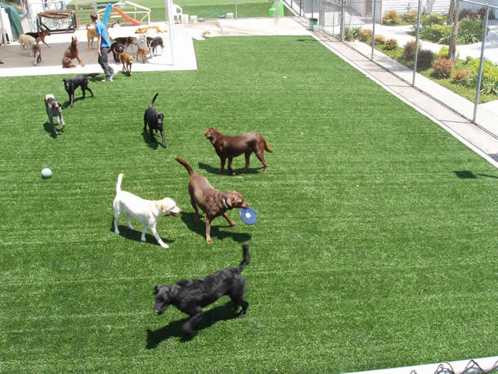 dog friendly backyard ideas with Fake Grass For Dogs on Garden Decking Ideas By Using Bamboo As Japanese Style likewise Alternatives To Lawn In Backyard Alternative To Grass In Backyard Heucheras And Lawn Grass In Pretty Pattern Next To Deck Patio Furniture Herb Planter Alternatives To Grass In Backyard For Dogs also Cedar Triple Tower Outdoor Friendly Cat Tree Condo together with Small Patio Ideas To Improve Your Small Backyard Area furthermore Cheap Diy Fencing Ideas.