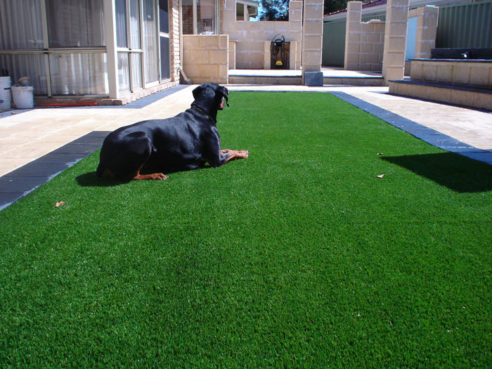 Dog laying on Fake turf